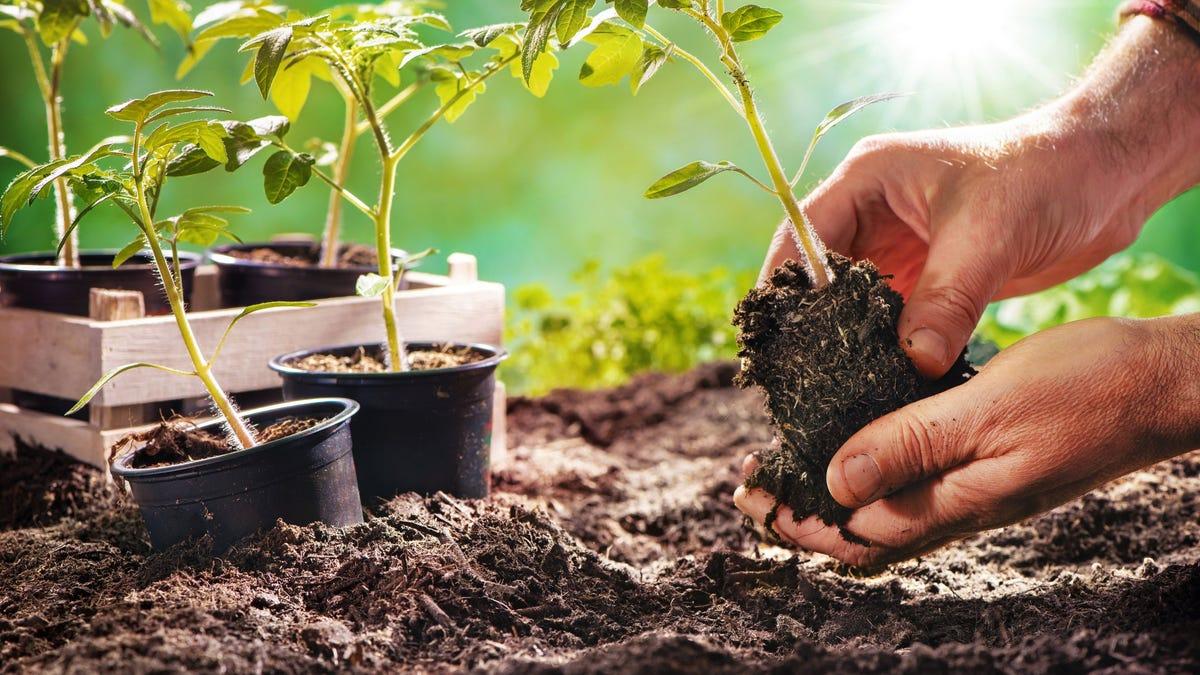 The Best Health Benefits of Gardening.